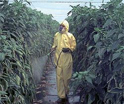 Imagen de persona esparciendo producto fitosanitaria sobre las plantas en un invernadero.