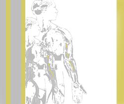 Dibujo de dos personas de perfil, mostrando los músculos del cuerpo humano