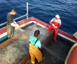 Imagen de tres pescadores en la cubierta de un barco pesquero manipulando las redes