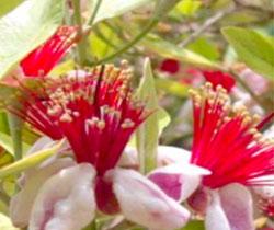 Imagen de unas flores