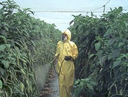 Imagen de persona esparciendo producto fitosanitario sobre las plantas en un invernadero