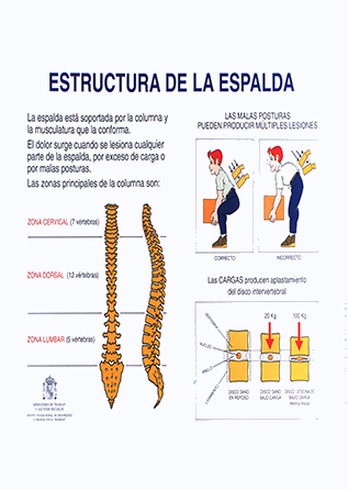 Cartel. Estructura de la espalda - Año 2010